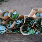 sustainable confetti wedding ceremony southern highlands silver dollar blue gum bowral wedding wedding venue rustic wedding diy wedding wildes meadow burrawang robertson celebrant moss vale mittagong cheap wedding venue