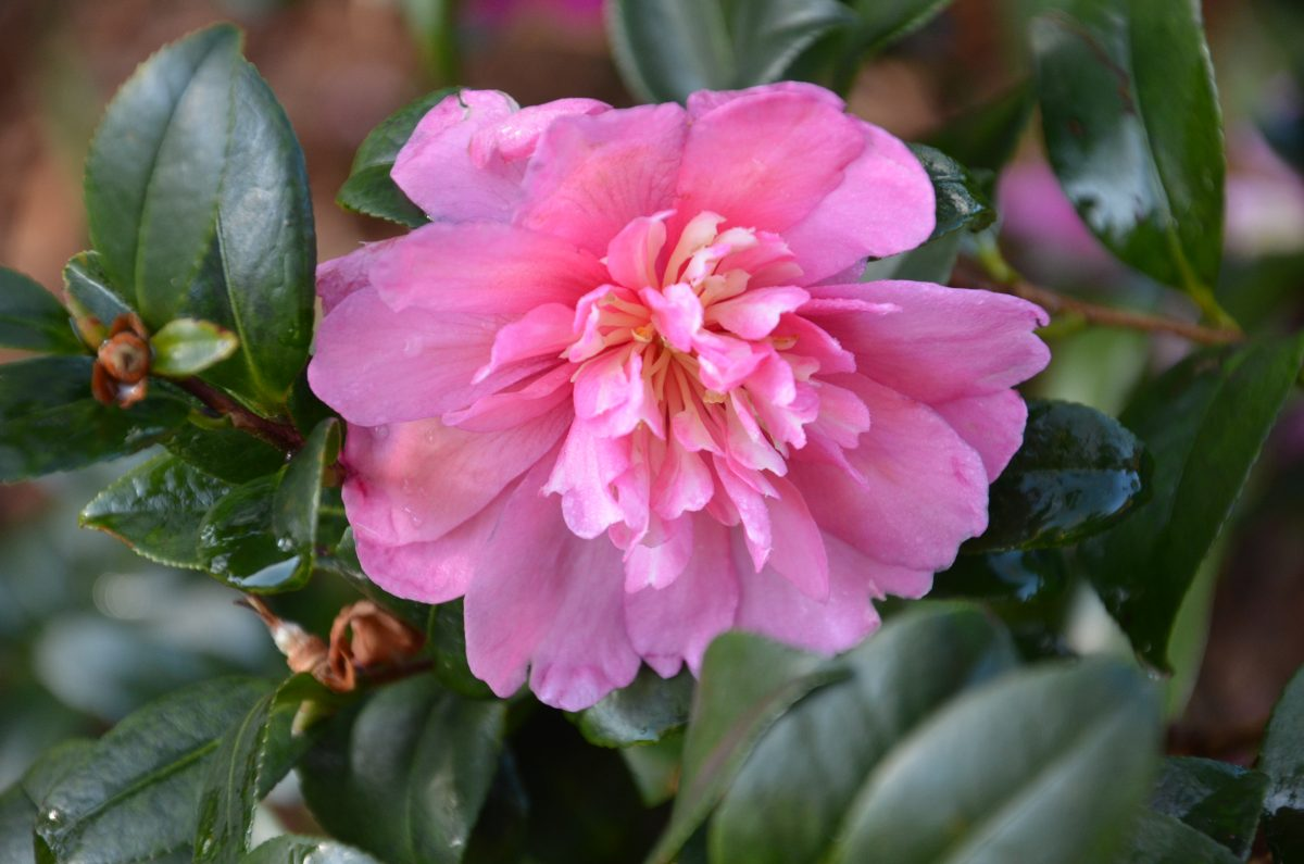 why have your wedding in winter in the southern highlands the